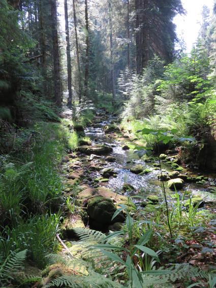 Ruisseau forestier