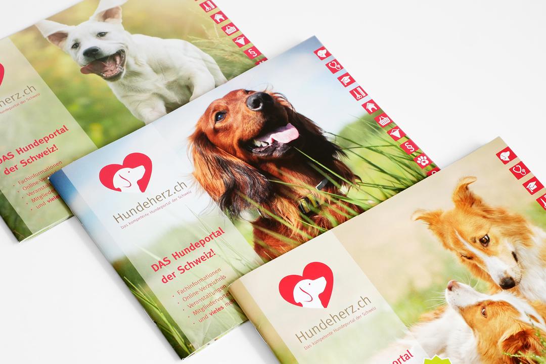 Corporate Design mit Logo und Geschäftsausstattung für eine Hunde-Forum // Imagebroschüren