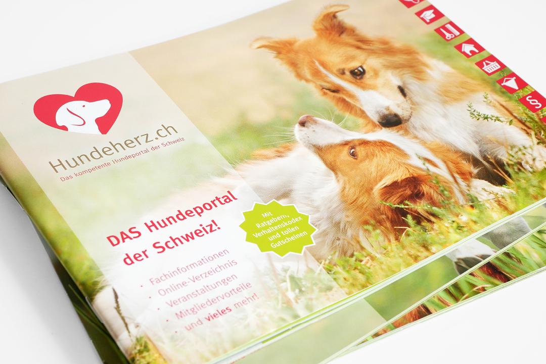 Corporate Design mit Logo und Geschäftsausstattung für eine Hunde-Forum // Imagebroschüre