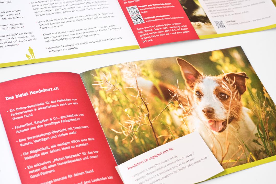 Corporate Design mit Logo und Geschäftsausstattung für eine Hunde-Forum // Flyer