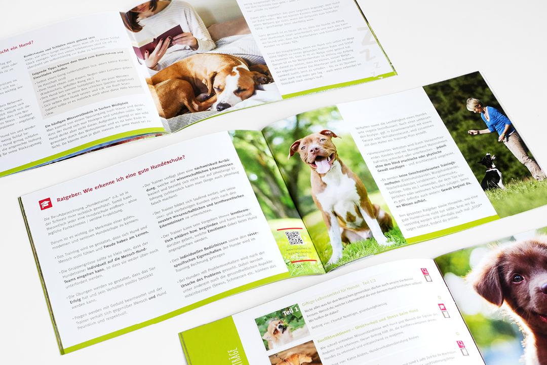 Corporate Design mit Logo und Geschäftsausstattung für eine Hunde-Forum // Broschüre