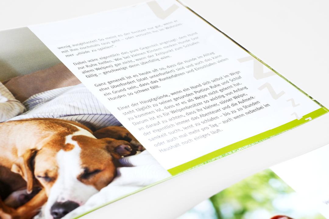 Corporate Design mit Logo und Geschäftsausstattung für eine Hunde-Forum // Detail der Imagebroschüre