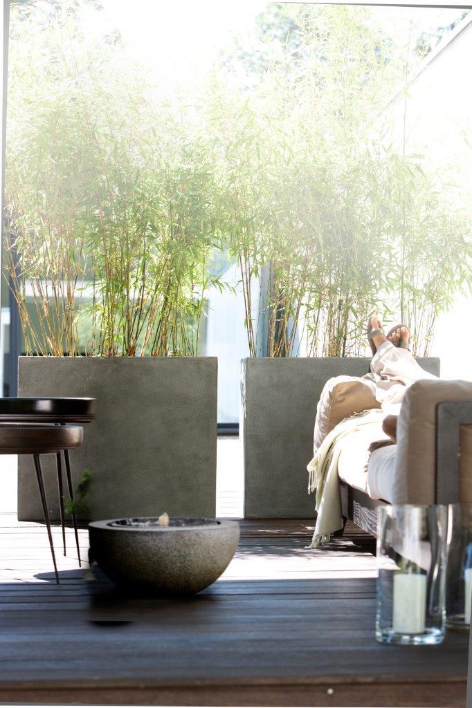 Bambus im Pflanzgefäß an Terrasse