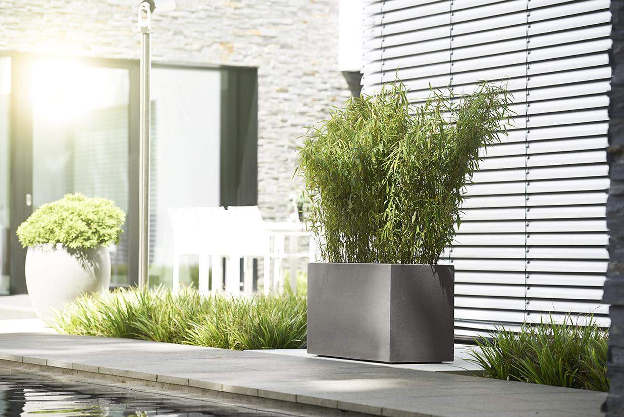 Pflanzgefäß mit einem Bambus