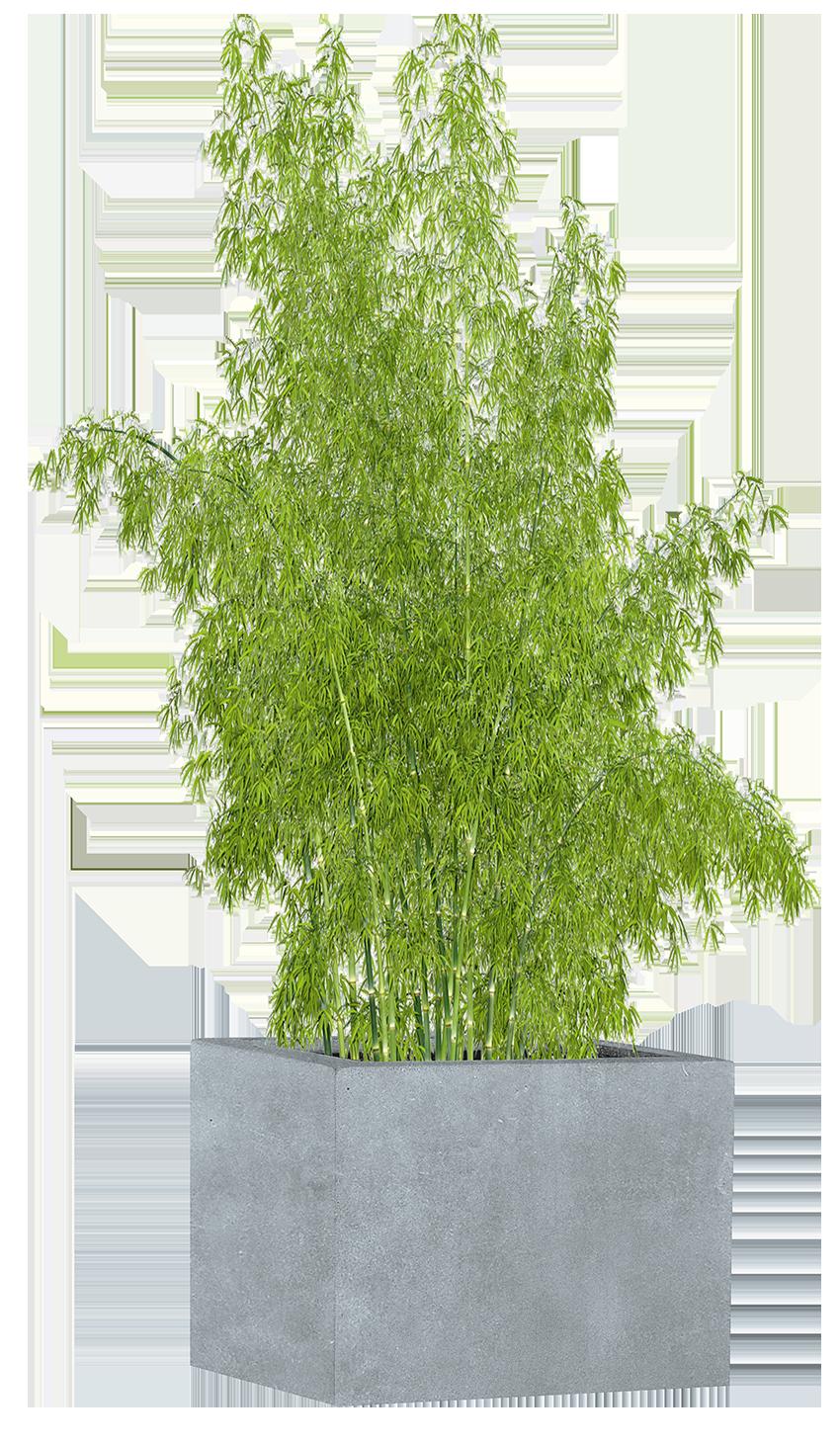 Pflanzgefäß mit Bambus