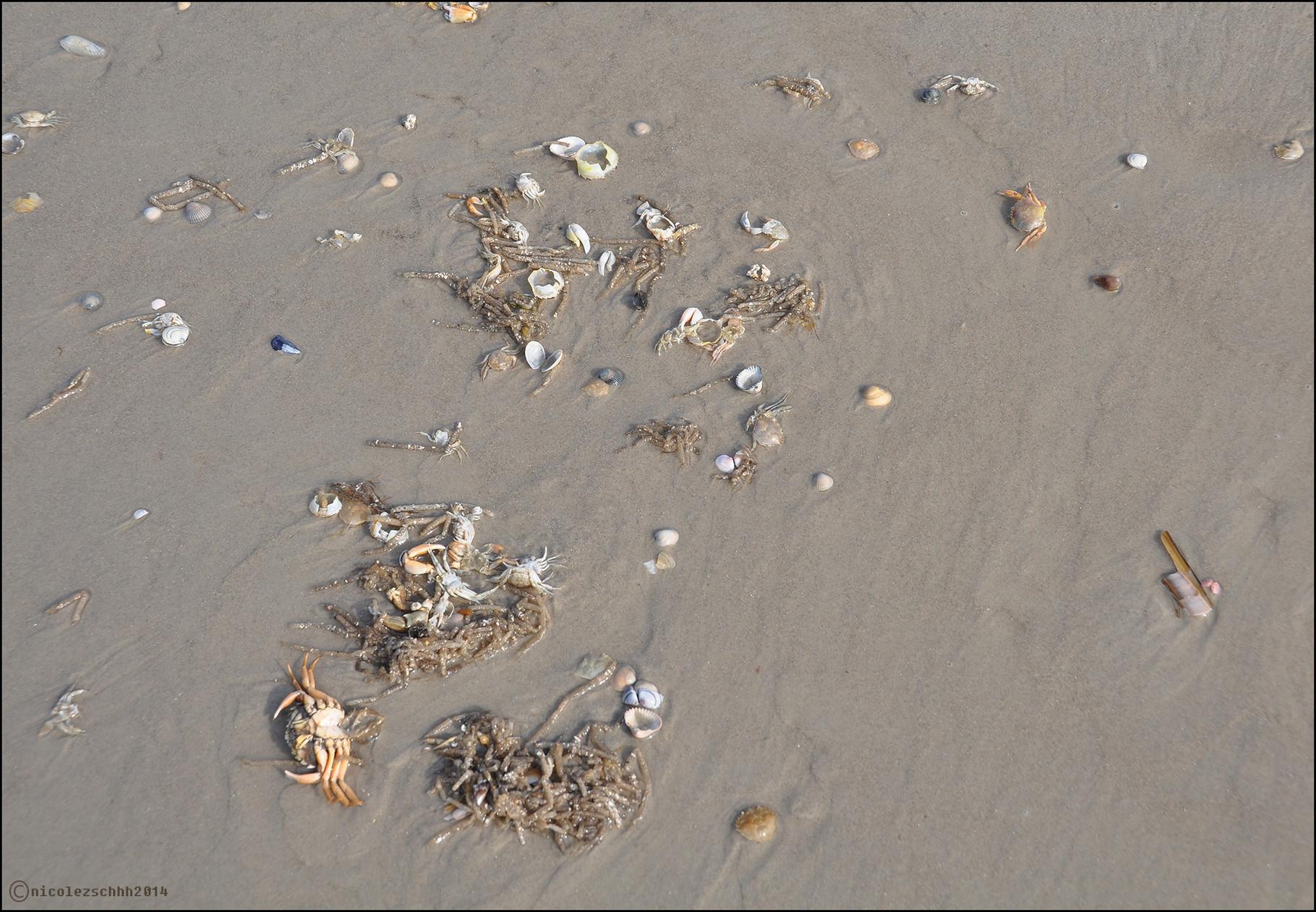 Strandgekrümel