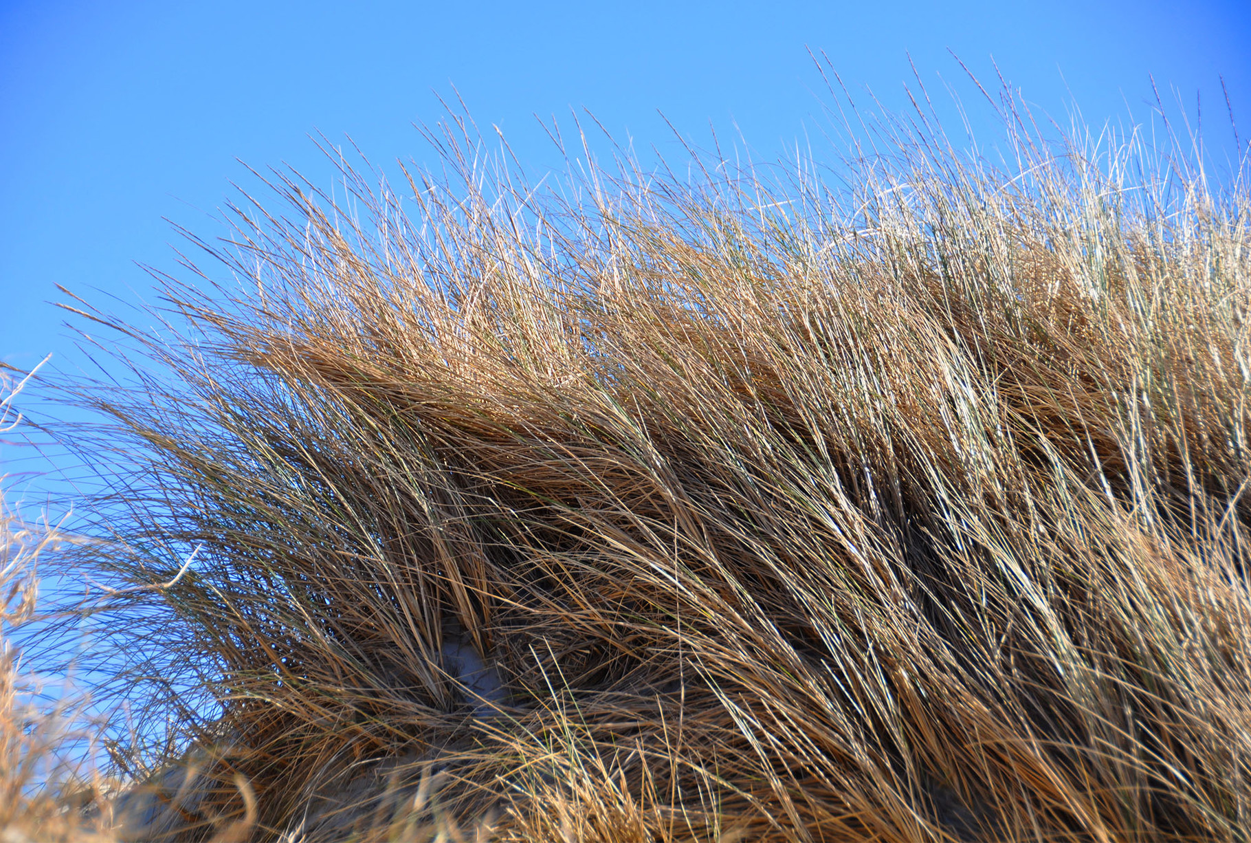 Haare oder Düne..., das ist hier die Frage