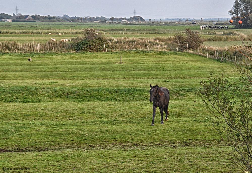 """"""" Mein """" Pferd...."""