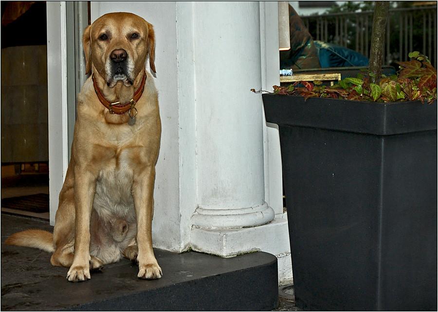 Ich lebe in Pöseldorf, aber bin auch nur ein Hund...........