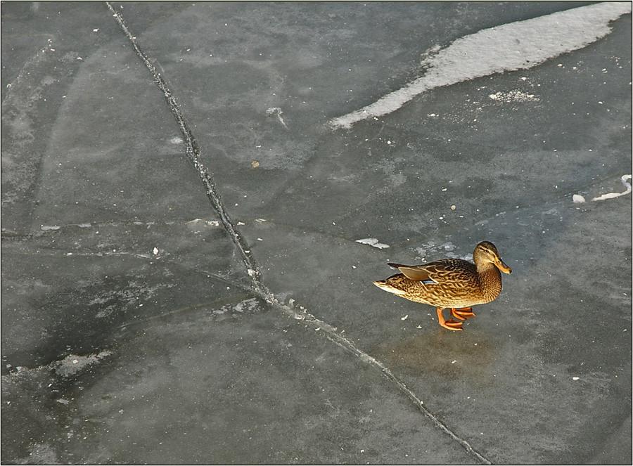 lieber kalte Füße auf dem Eis, als einen warmen Körper im Backofen...........