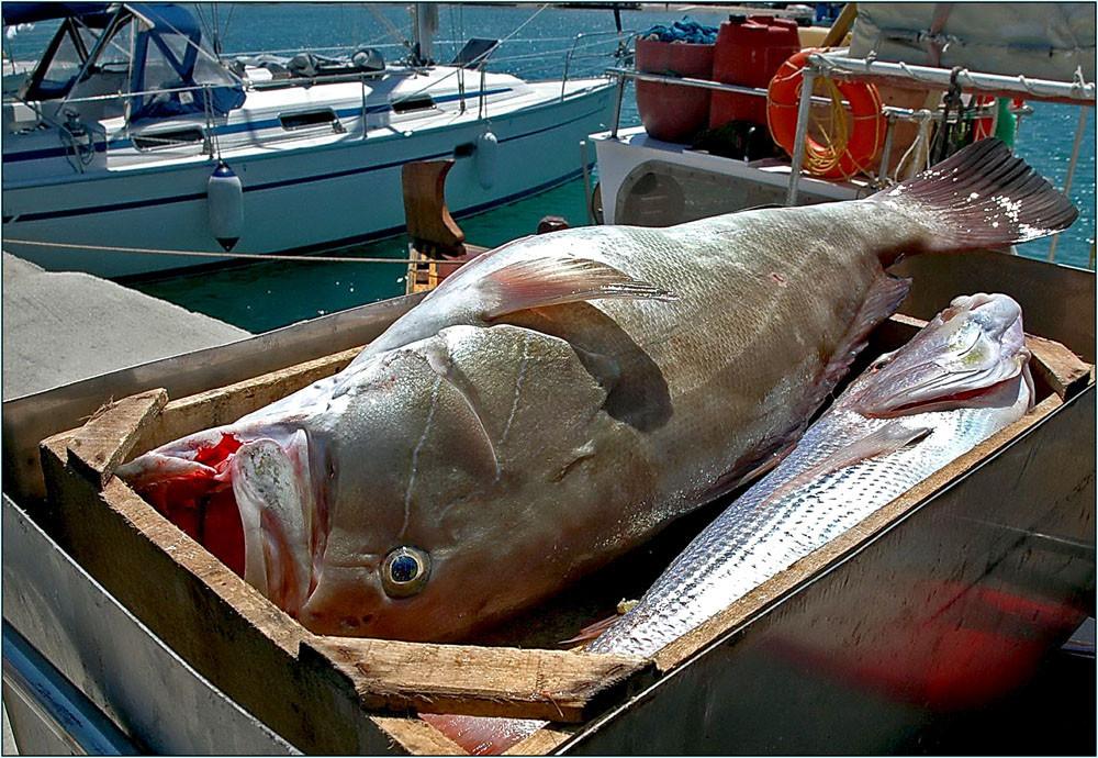 Na wenn das kein großer Fisch ist..:-)
