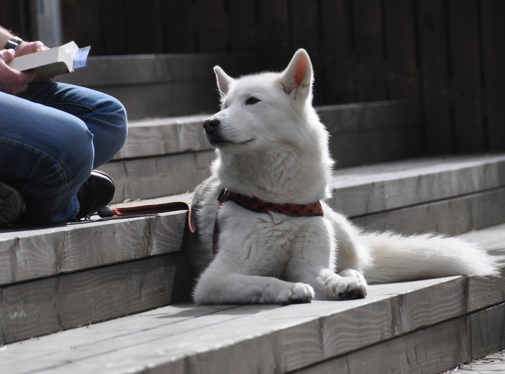 Hunde sind willkommen, aber bitte nicht im Restaurant - und Loungebereich