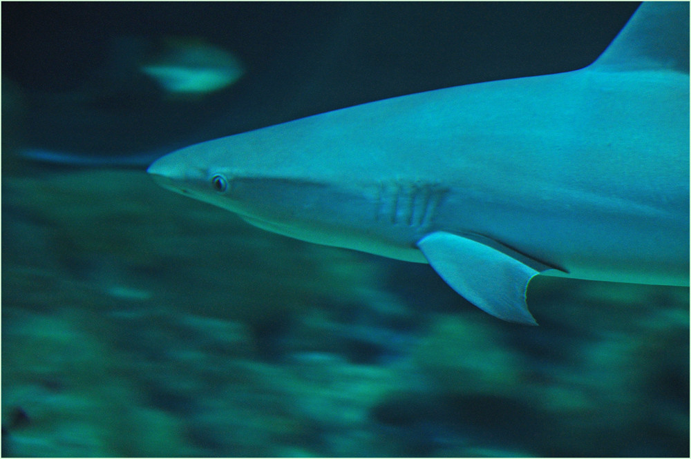 """ hai "" sagte der Hai..;-)))"