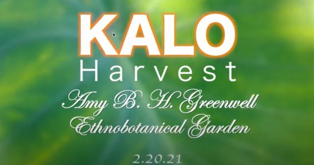 Kalo in the Garden