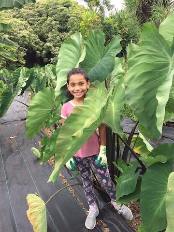 Kaleigha Van Dyke Amy Greenwell Garden Hawaii