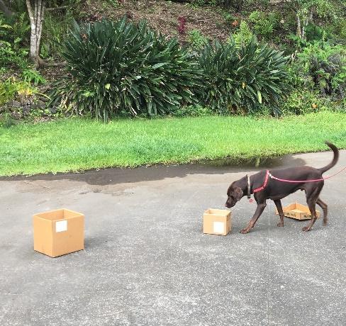 Dog training Amy Greenwell Garden Big Island Hawaii