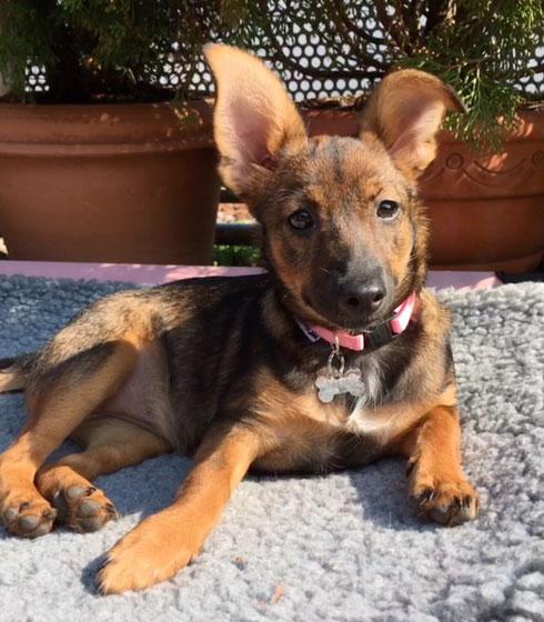 Maia darf als eigener Hund in ihrer Pflegestelle in Bamberg bleiben.