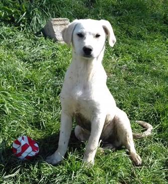 Fiocco ist in eine Familie in Schnelldorf gezogen.