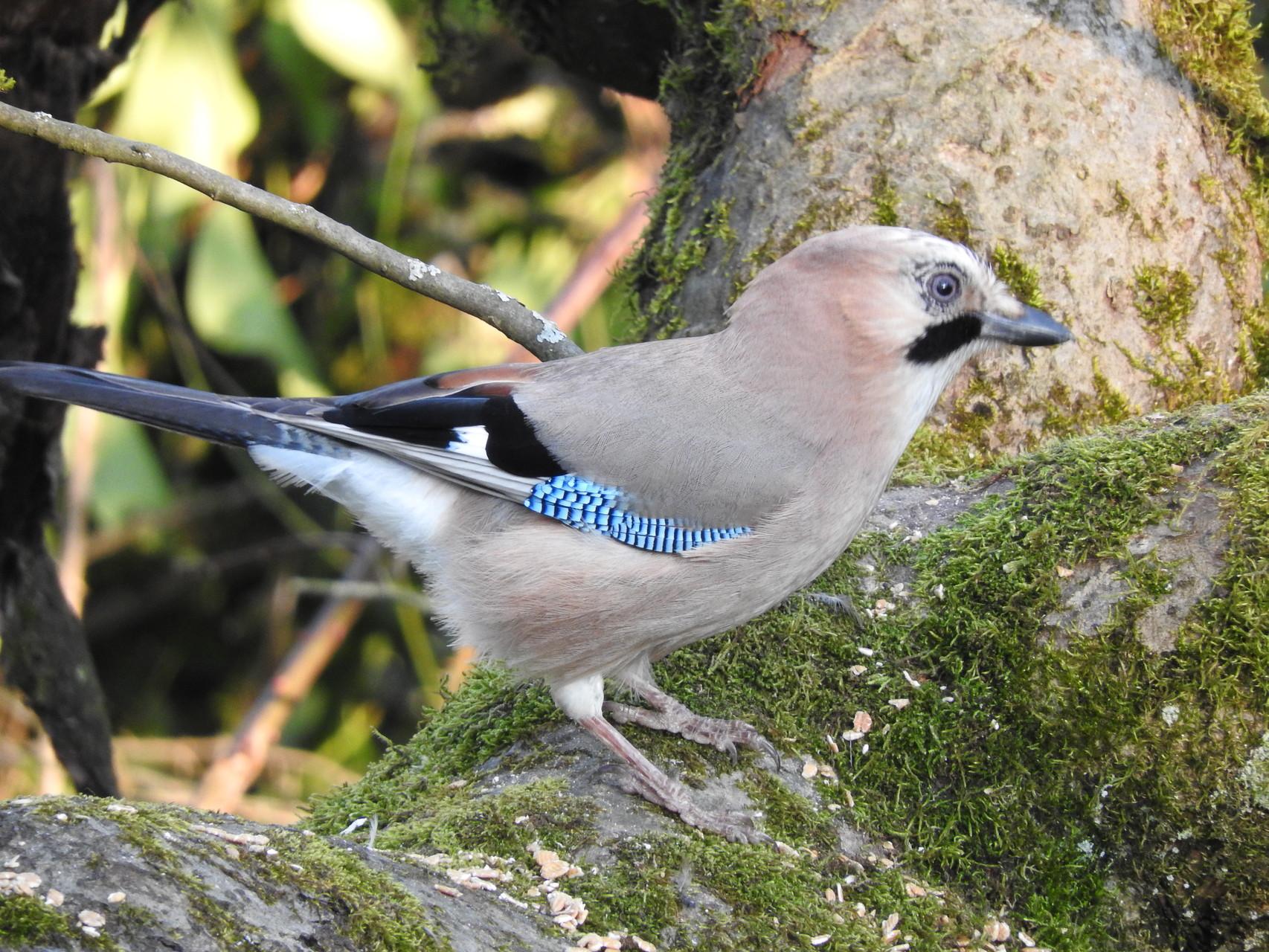 Ein wunderschöner Vogel.