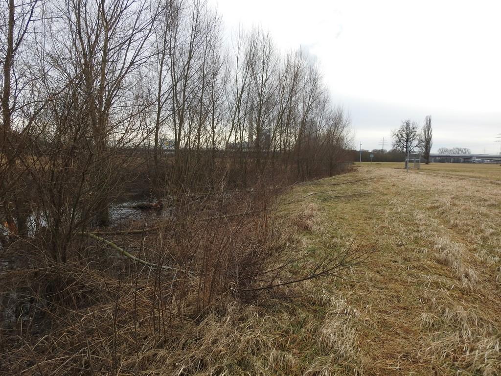 Ein kleiner vor etlichen Jahren angelegter Kanal ist jetzt zum Biberrevier geworden.
