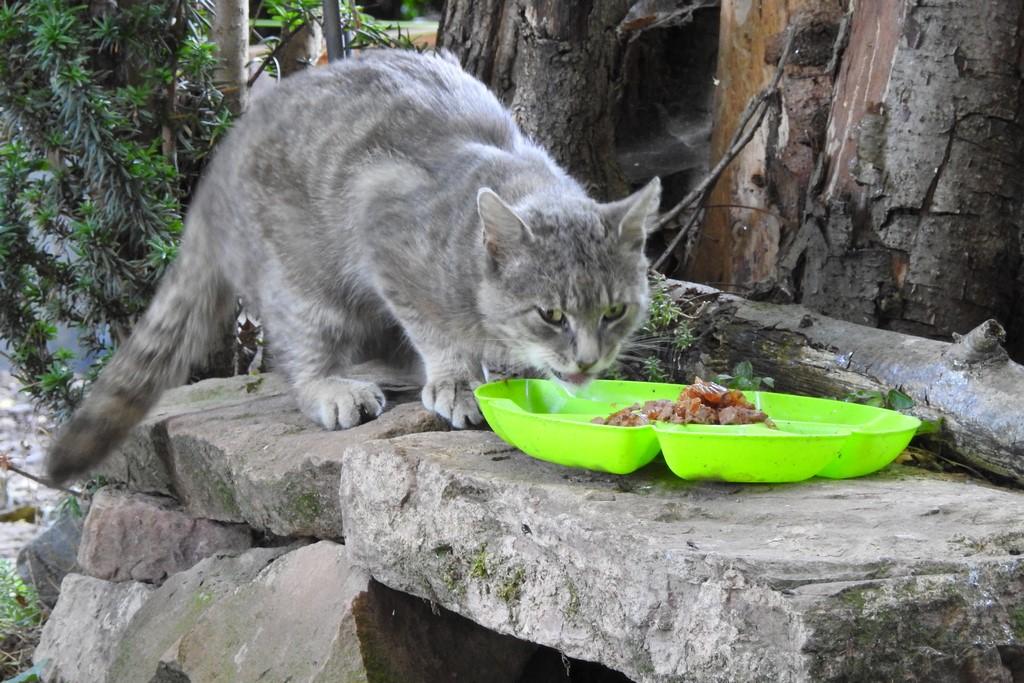 Ein neues Mitglied in der Hortus Katzenfamilie.
