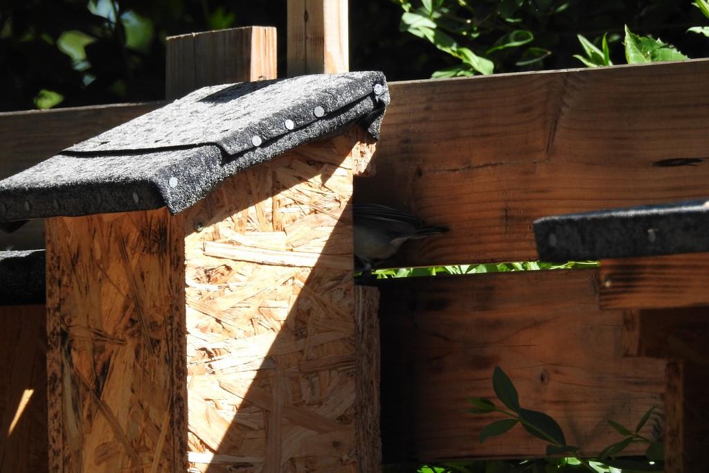 Der Baumläuferkasten biete 9 Babykohlmeisen ein Zuhause.