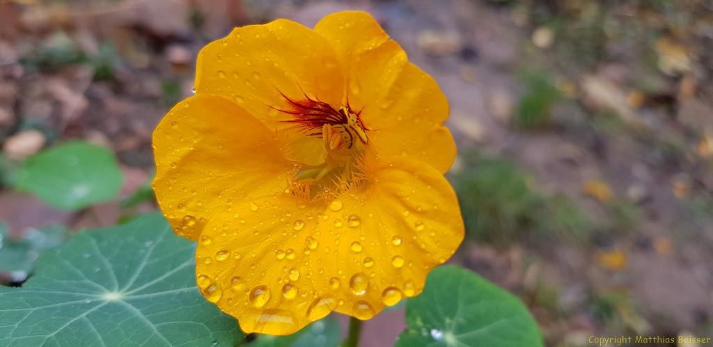 Filigranes Blütenherz.