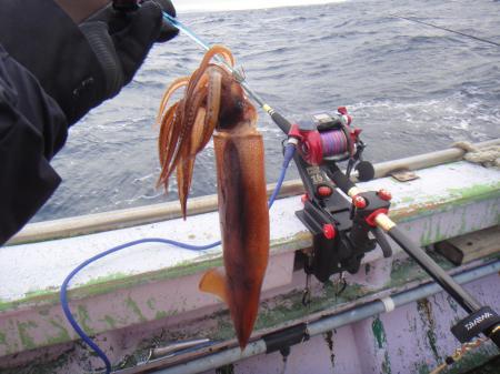 スルメ沖釣りイメージ