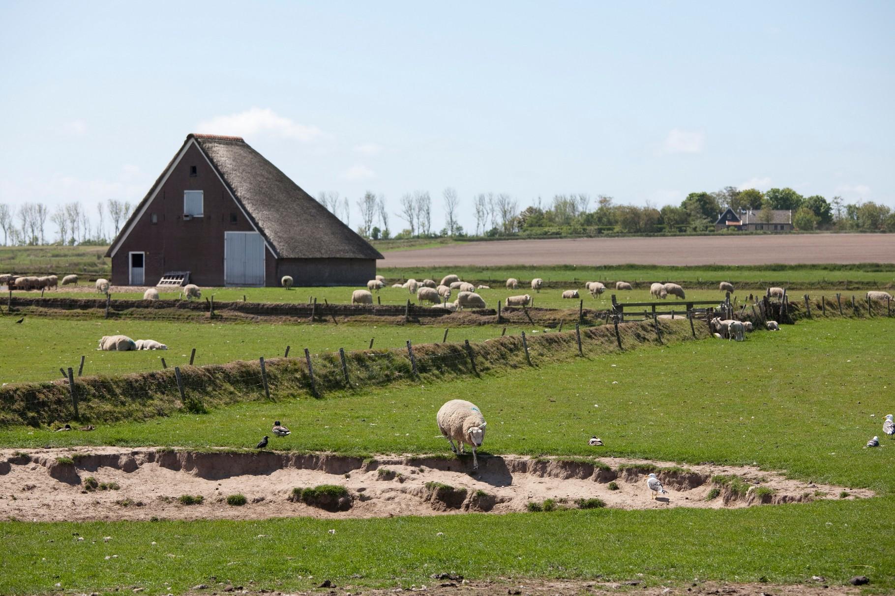 schapenboetkolkfotoTessaJol