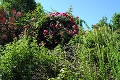 Une vue du Jardin des plantes à couleurs.