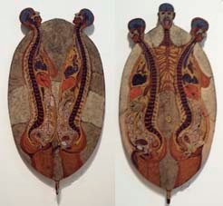 Duocephalus et Triocephalus