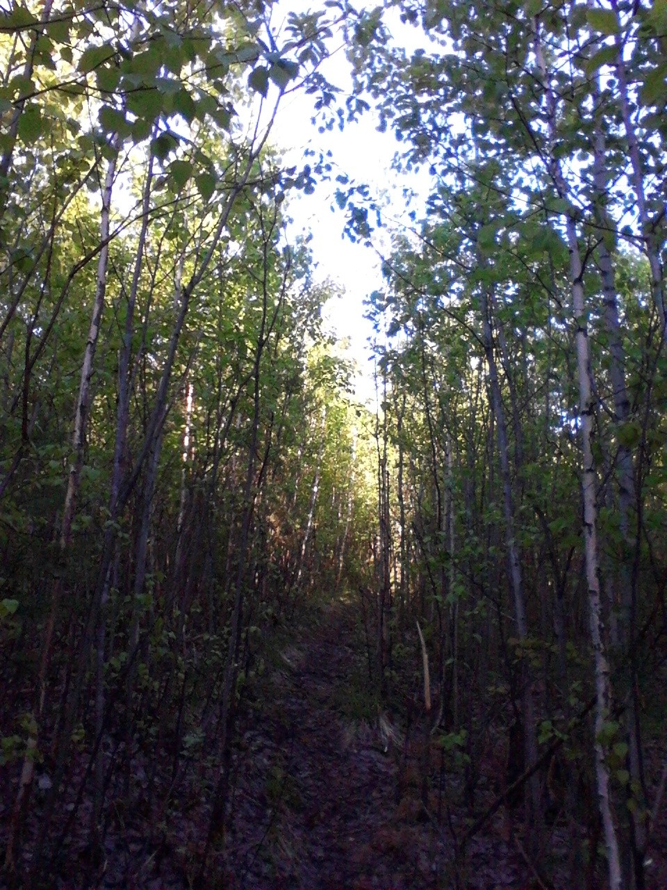 Стена леса