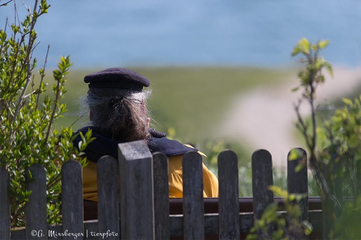 Ruhe und Frieden... Blick auf's Meer, dazu die Mundharmonika, Vogelgezwitscher... hach...