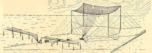 antenne Coltano