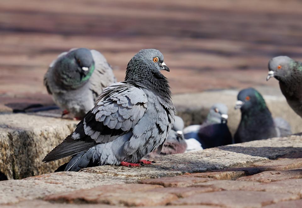 Unbekannter schießt im Stadtteil Vauban mit Blasrohr auf Vögel