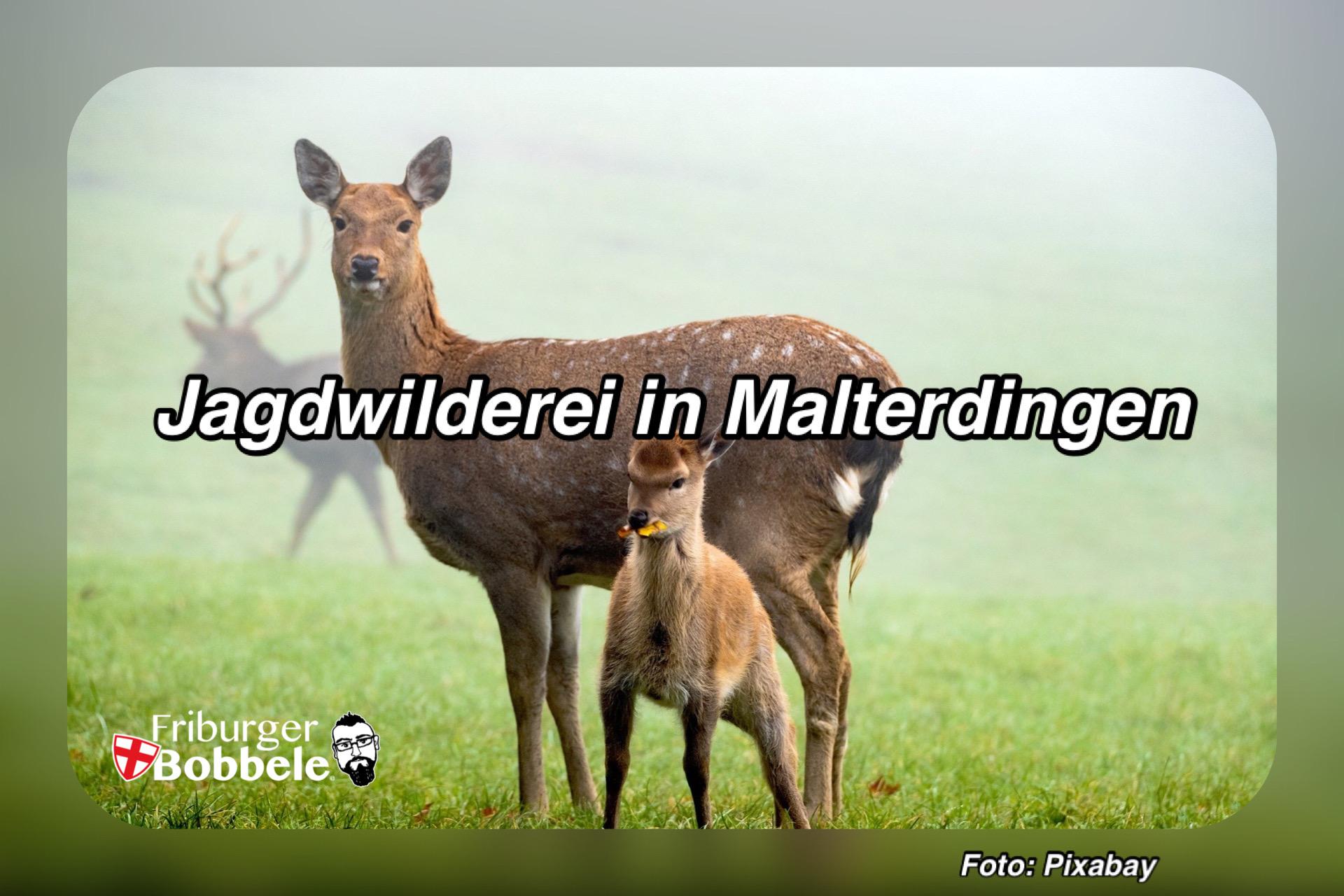 Jagdwilderei in Malterdingen - Zeugen gesucht