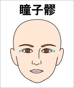 瞳子膠(どうしりょう)