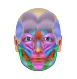 小顔 筋肉 画像1