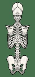体の歪みチェック方法