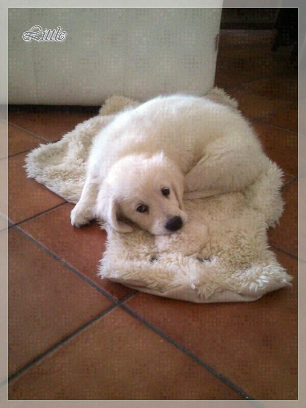 Little, de Cunit, con su mantita preferida (a ver cuanto le dura!).