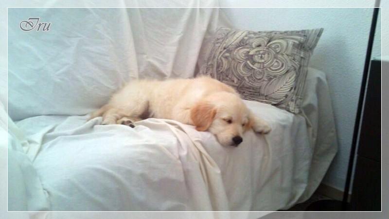 Iru, la gitanilla de Alicante, se adueñó del sofá el primer día!