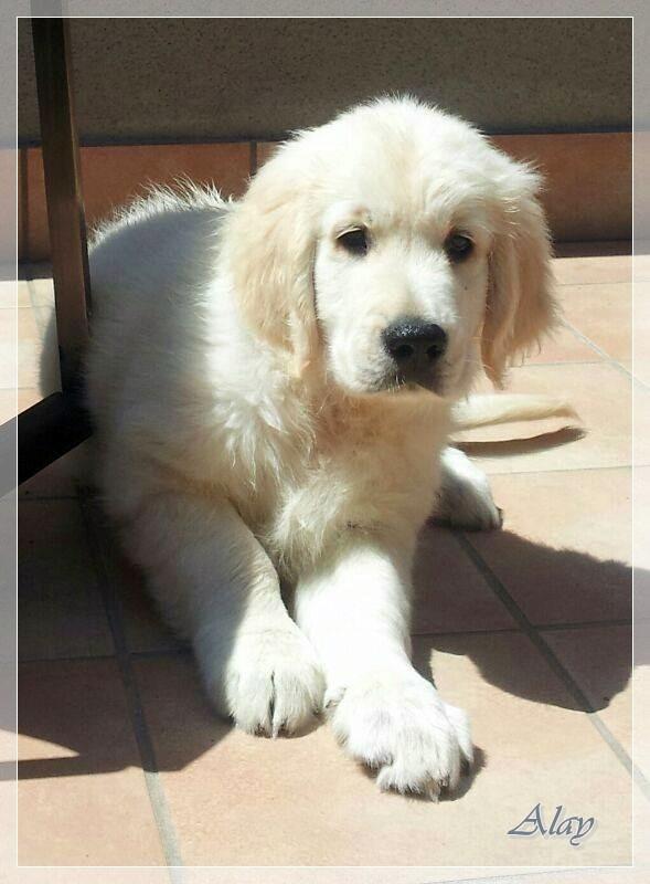 Alay, el guapo de Badalona, tomando el solete en la terraza!