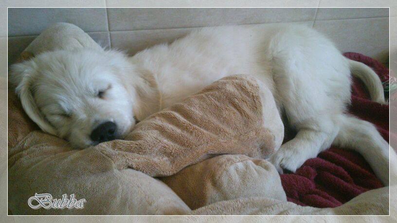 Bubba, de Badalona, durmiendo junto a su super osito!