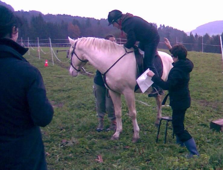 Mit vereinten Kräften wurde der Berg von Pferd erklommen :-)