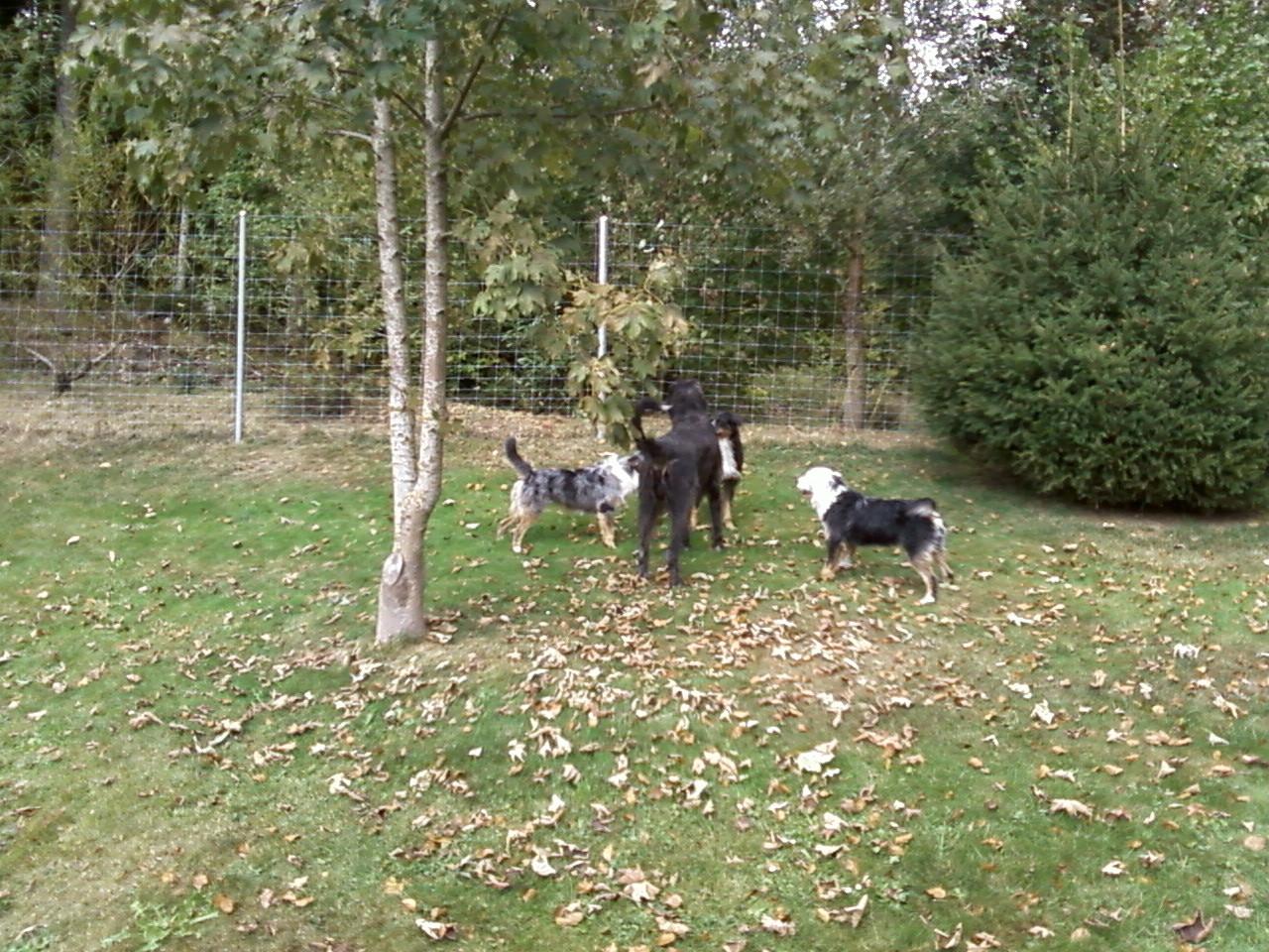 Ll'aara-mj, Ll'ohna und Tezah mit einem Irish Wolfhound