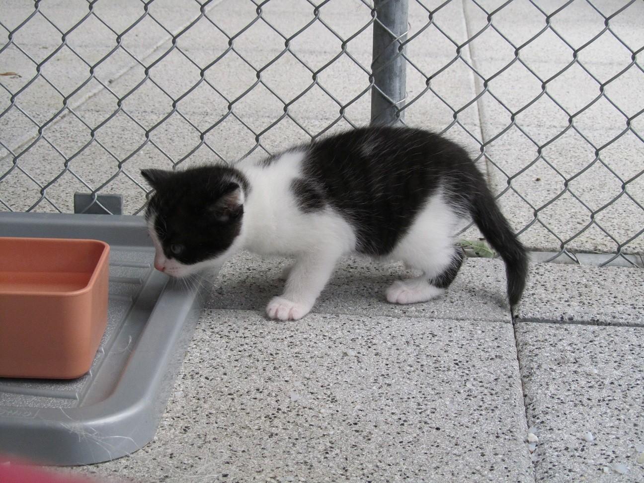 Karli (eigentlich Dalkar = Dalmatiner Kater, wegen der Punkte), lebt auf dem Tannenboden in der Gruppe der eigenen Katzen