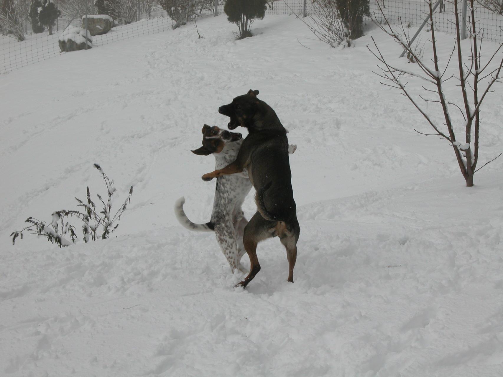 """Kampfhunde"""