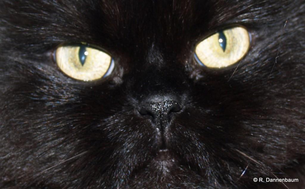 "Black Cat ""Jessica"""