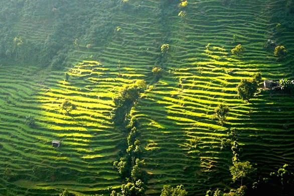 Rizières en terrasses, Rolwaling, Népal