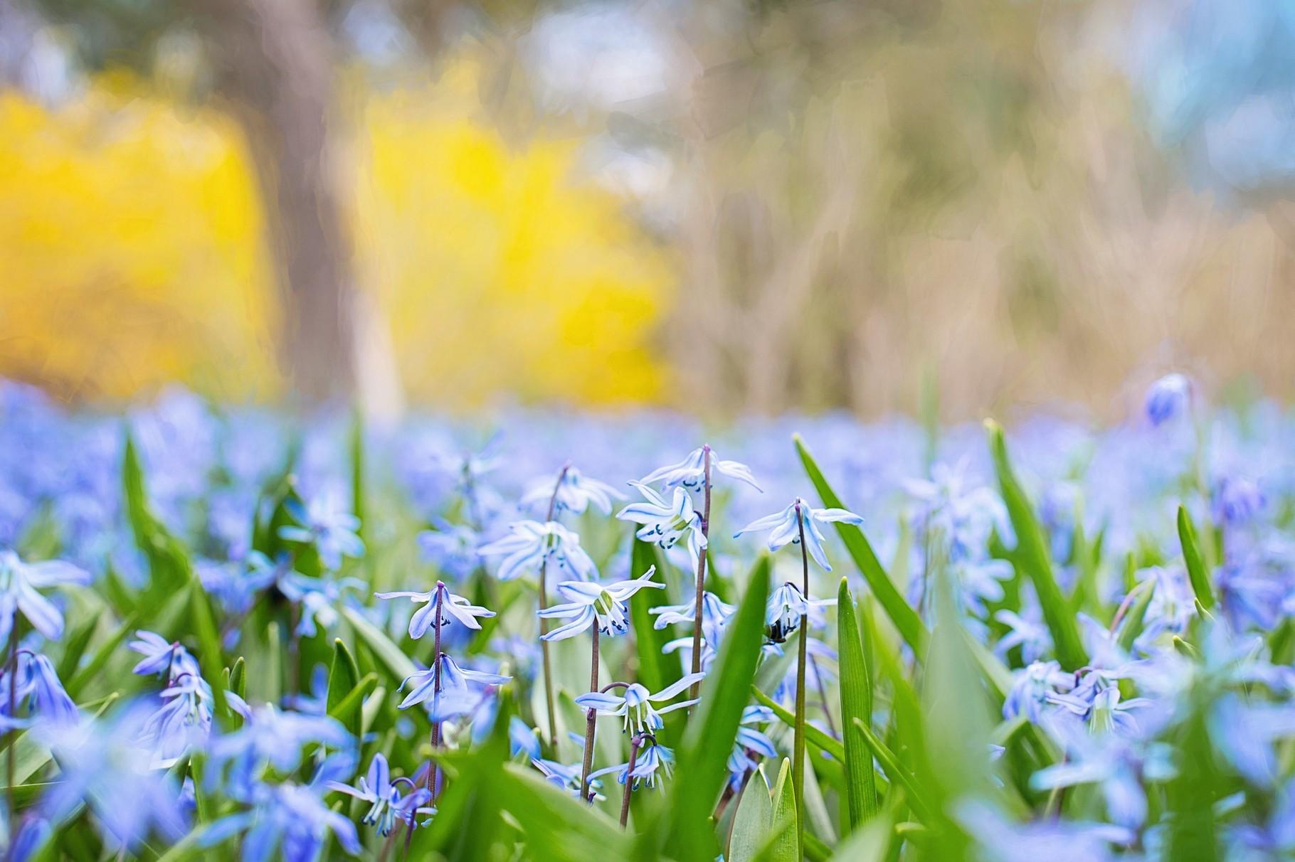 Allergien im Frühling?